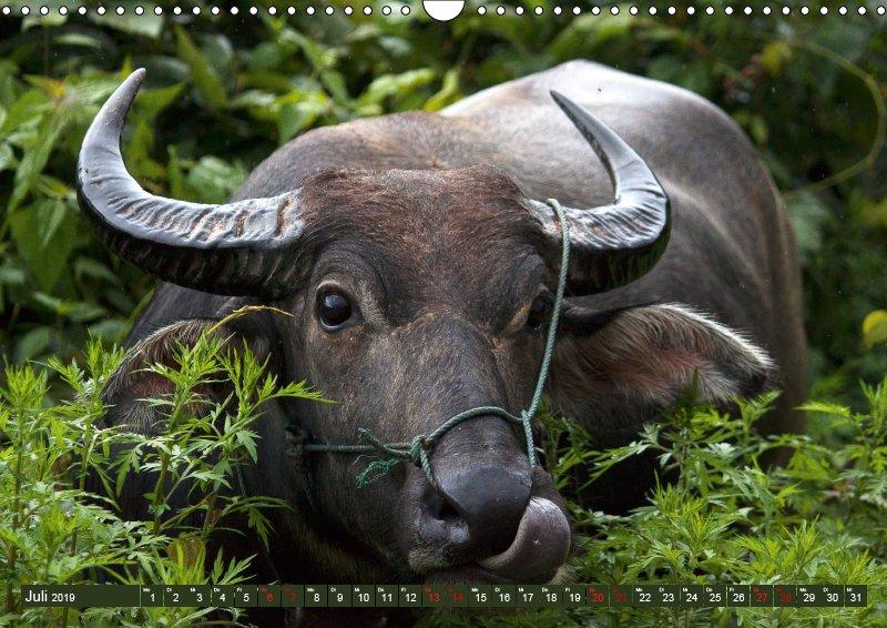07 Juli Tierkalender Tierisches aus Asien 2019