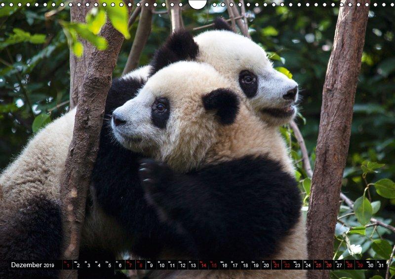 12 Dezember Tierkalender Tierisches aus Asien 2019