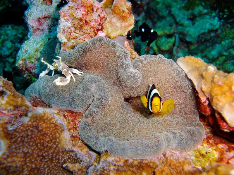 Uber underwater-photography