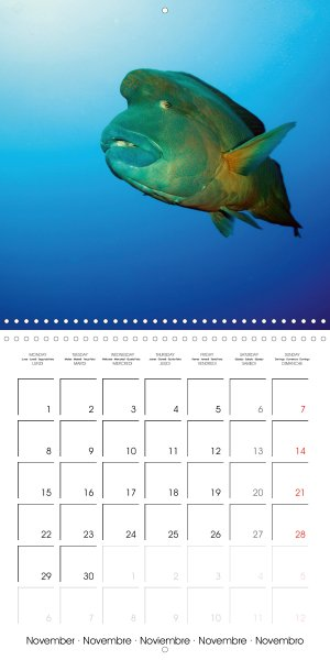 2021011_calender_2021_underwater-Highlights_November