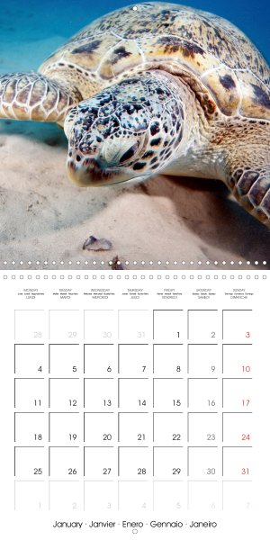 202101_calender_2021_underwater-Highlights_January