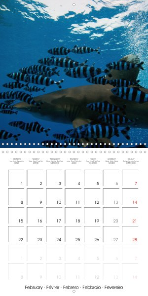 202102_calender_2021_underwater-Highlights_February