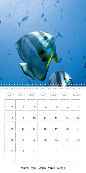 202103_calender_2021_underwater-Highlights_March