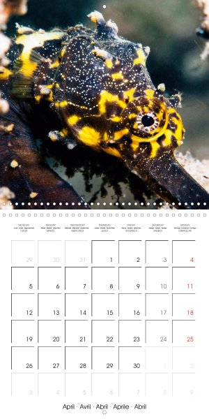 202104_calender_2021_underwater-Highlights_April