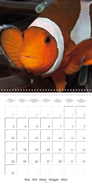 202105_calender_2021_underwater-Highlights_May