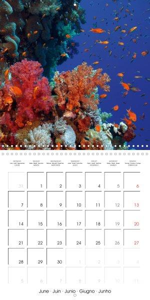 202106_calender_2021_underwater-Highlights_June