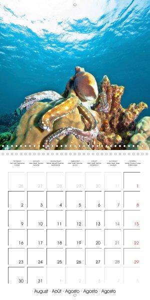 202109_calender_2021_underwater-Highlights_August