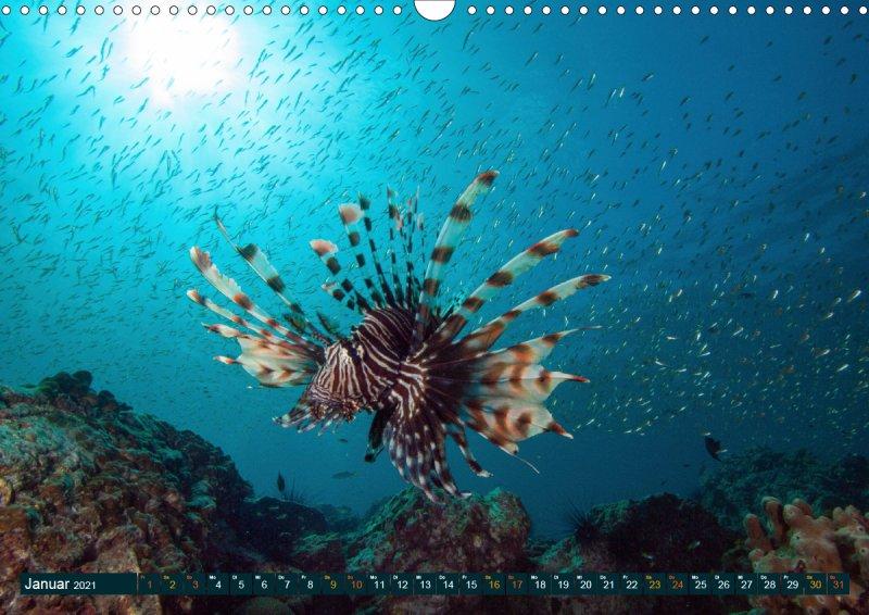 202101_Tauchen_Fische_Meer_Unterwasserkalender_Januar