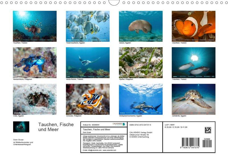 202113_Tauchen_Fische_Meer_Unterwasserkalender_Index