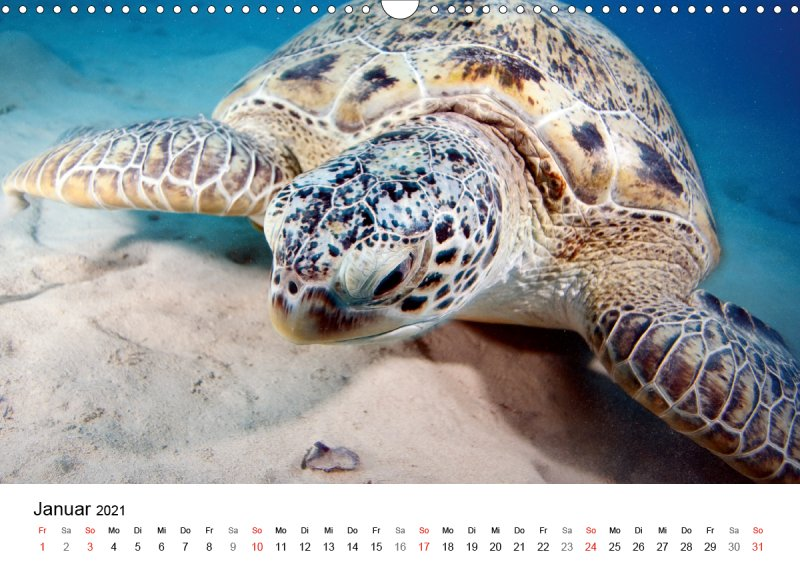 202101_Unterwasserkalender_Highlights_aus_dem_Meer_Januar