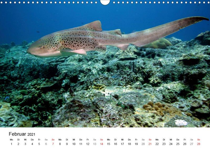 202102_Unterwasserkalender_Highlights_aus_dem_Meer_Februar