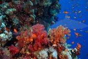 Riff Zabargad Island (2)