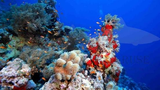 Riff Zabargad Island