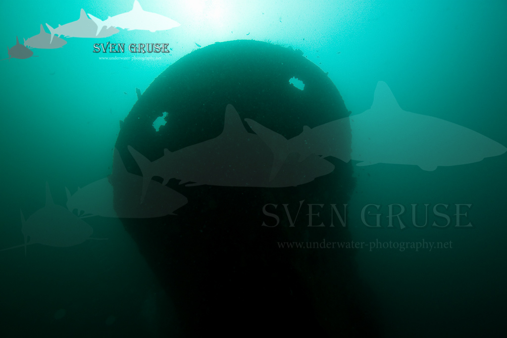 Kuda Giri Wreck Maledives