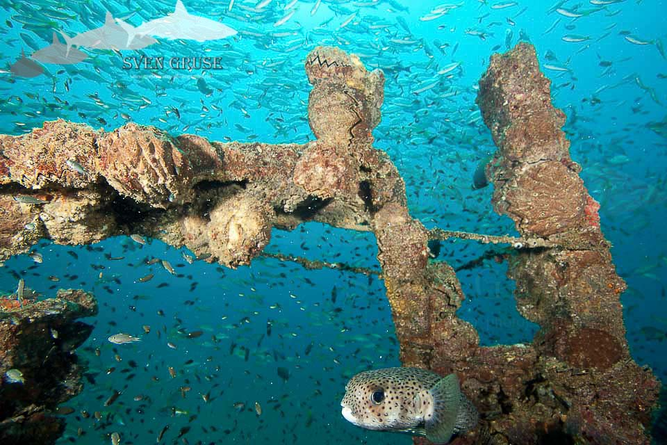 Boonsung Wreck Thailand – Fishsoup