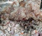 Koh Lipe Stonehenge, sea moth
