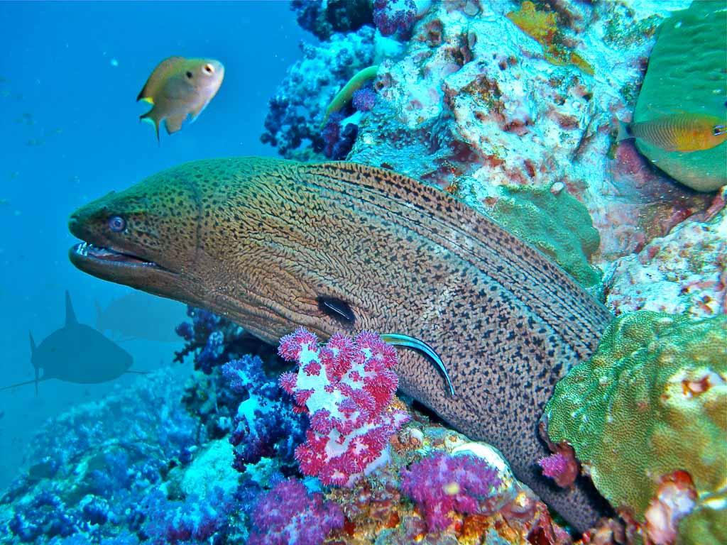 Unterwasserfotografie 10 Tipps für Anfänger