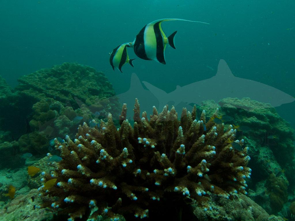 d3a38c8e6e74ed Wasser und Licht und Fotografieren - Unterwasserfotografie