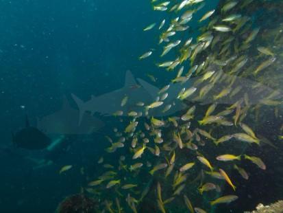 Schwebeteilchen auf dem Unterwasserfoto
