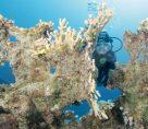 Soma Bay: Tauchurlaub Für Kurzentschlossene